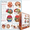 Eurographics 1000 pc Jigsaw Puzzle - THE BRAIN